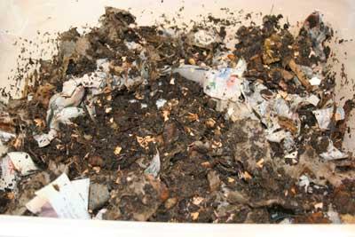 Compost-box-couple-weeks